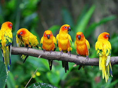 Parrot Jungle and Gardens - Florida (Miami)