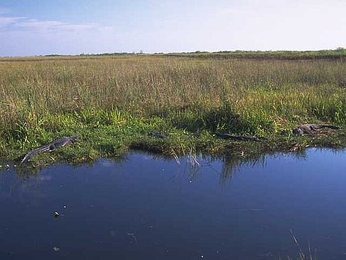 Fotos Everglades Nationalpark
