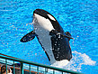 Foto Sea World - Orlando